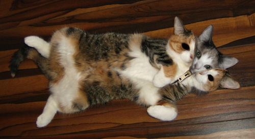 Cat Zipped